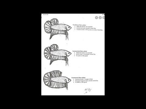 mate-bettero-genética-del-pez-betta-formas