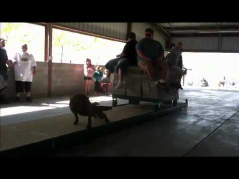 pit bulls pulling over 6500 lbs, Utah ADBA weight pull