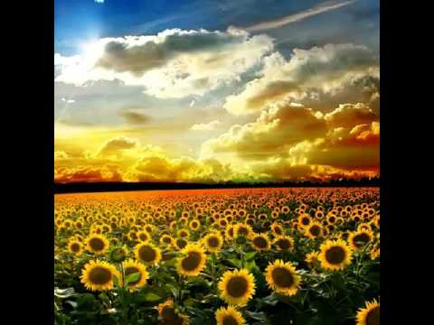 Sing with me the sunflower song rhyme