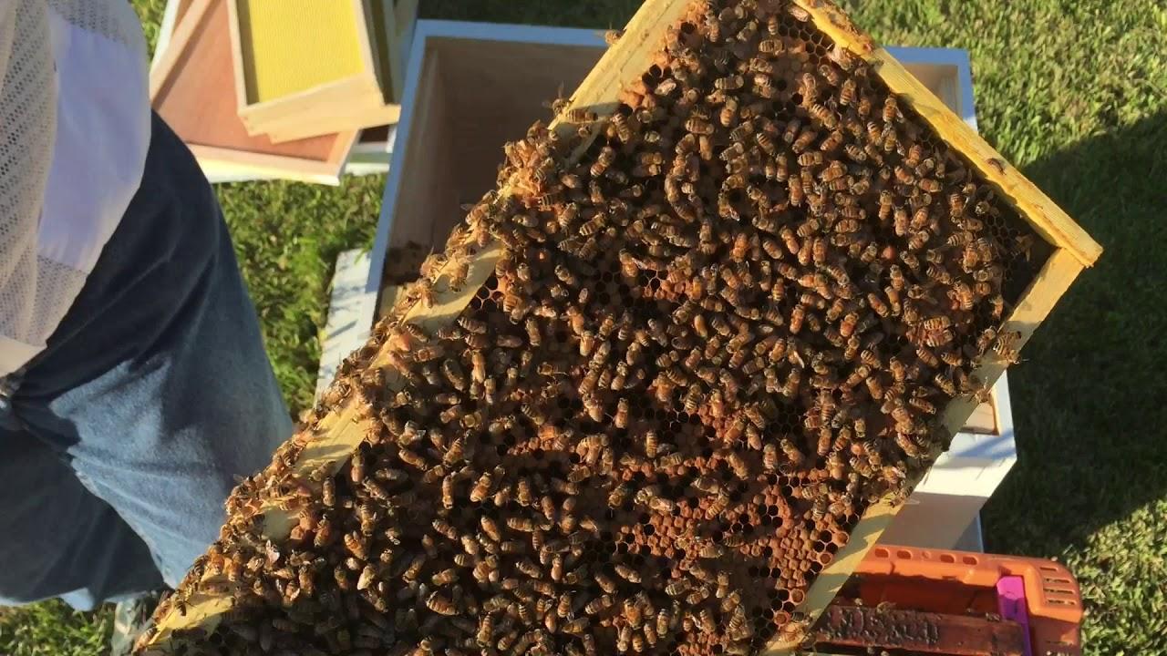 Installing My First Nuc - Adventures In Beekeeping