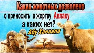 Каких животных дозволено приносить  в жертву Аллаху, а каких нет? Абу Ханзала