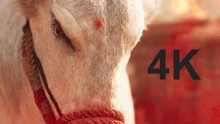 Syeraa Bull Fight Scene 4K