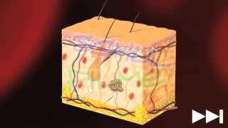 Haut - Trailer Schulfilm Biologie