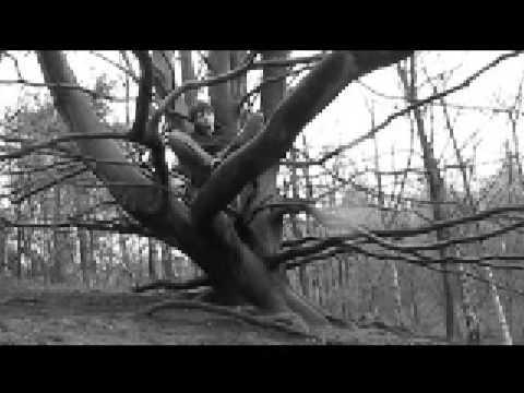 rufus wainwright tiergarten