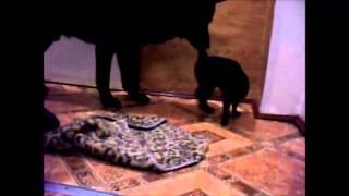Невероятная любовь собаки и кошки