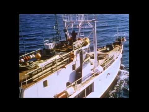 CalypsoA Tribute To Jacques Cousteau