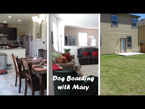 Rover Dog Boarding Vlog