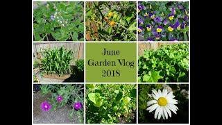 June Garden Vlog 2018