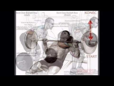 See That How To Manage Your Body Itraction With GYM Steps Your Body Parts