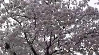 阿南市 岩脇公園 2014.3.31
