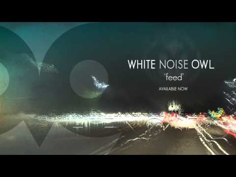 White Noise Owl - Feed