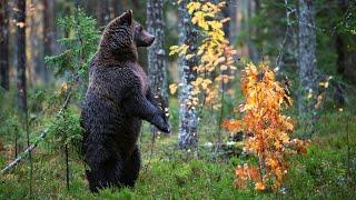 Осень в лесу.  Прекрасная природа, животные и птицы.