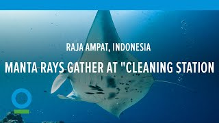 "Manta Rays Gather at ""Cleaning Station"" in Raja Ampat, Indonesia -- Conservation International (CI)"
