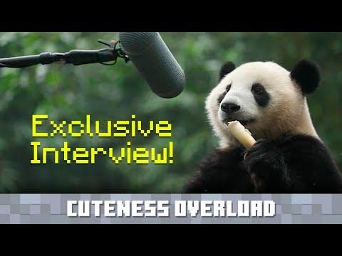 Recording Panda sounds
