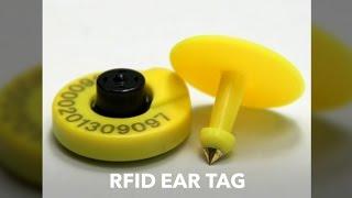 RFID Animal Tag Supplier, Cow Ear Tag, Bird feet Tag, Injectable Dog Tag