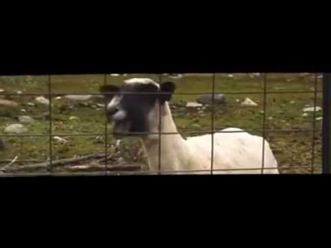 taylor swift-I Knew You Were Trouble (parody)