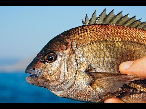 Морской карась. Рыбалка на черном море. Rock fishing. Rockfishing ...
