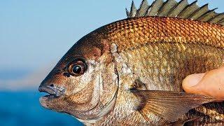 Морской карась. Рыбалка на черном море. Rock fishing. Rockfishing