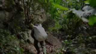 Ký sự tìm lan tập 3 phần 4 Find orchids