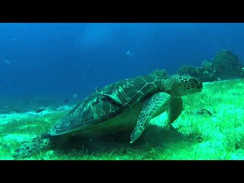 Underwater Adventures in Cebu and Bohol, Philippines