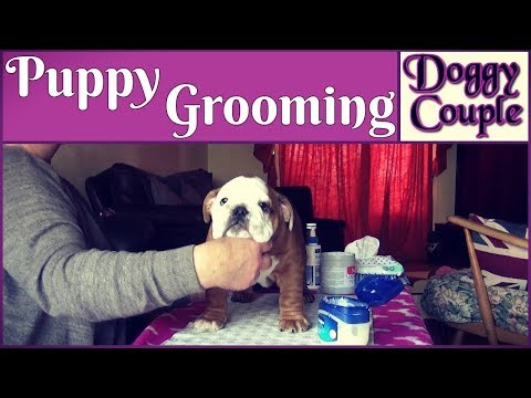 Puppy Grooming