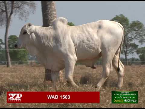 LOTE 36 - WAD 1503