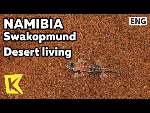 【K】Namibia Travel-Swakopmund[나미비아 여행-스바코프문트]사막 생명체/Skeleton Coast/Desert/Living/Spider/Lizard