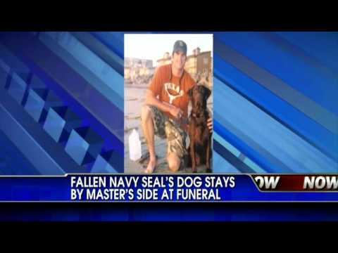 Dog Won't Leave Fallen Navy Seals Soldier's Side - Heartbreaking Video