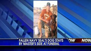 Dog Won't Leave Fallen Navy Seals Soldier's Side - Heartbreaking Video
