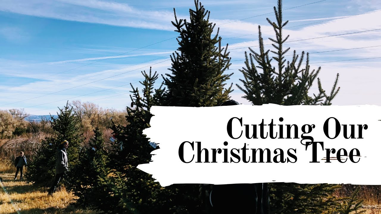 Cutting Our Christmas Tree at a Colorado Tree Farm - YouTube