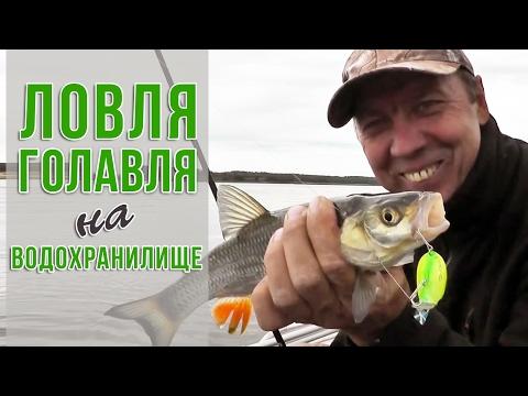 Занимательная ловля голавля на Чебоксарском водохранилище