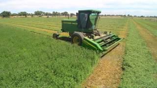 Triple M Custom Farming - Alfalfa Process