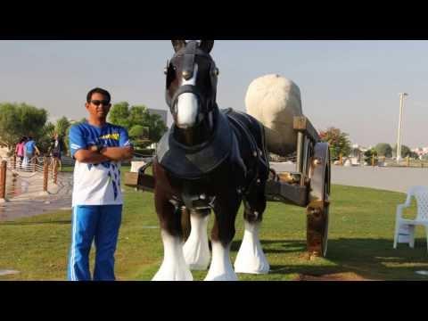 Aspire Park  Doha, Qatar ( Watch in HD settings )