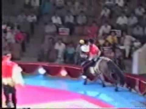 circus horse show