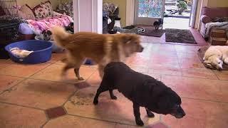Senior Dog Gathering Room Cam 02-17-2018 13:11:04 - 14:11:05