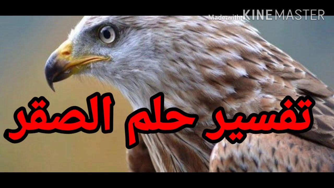 تفسير رؤية الصقر في المنام ما معنى رؤية الصقر في المنام تفسير الاحلام Tafsir Ahlam Youtube