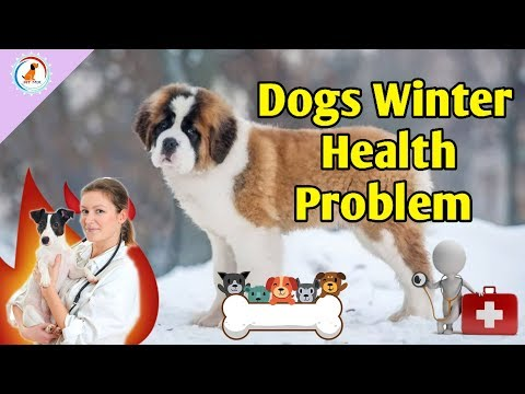 Dogs Winter Health Problems / Puppy winter care tips in Hindi / Dog health problems and solutions