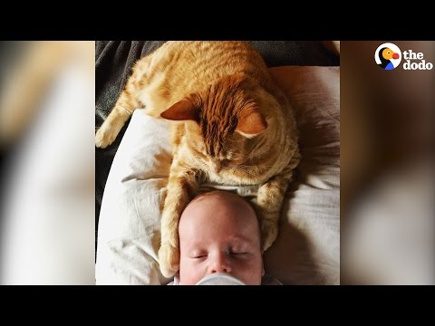 Cat Is Obsessed With New Baby Brother | The Dodo