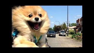 Funny Dogs and Cats Doing Funny Things 2018