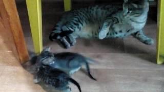 кошка воспитывает котят!