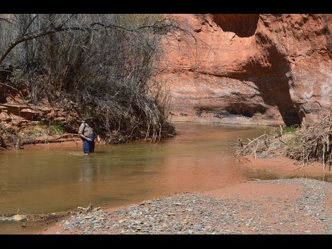 Backpacking Utah's Escalante Country: The Silver Falls Creek, Escalante River, Choprock Canyon Loop.