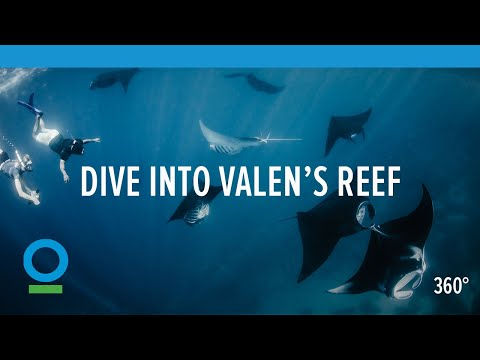 Dive into Valen's Reef | Conservation International (CI)