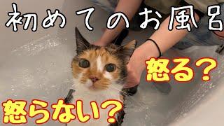 すぐキレる猫を初めてお風呂に入れてみたら…