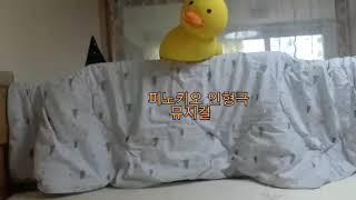 피노키오/뮤지컬/인형극/보하Tv/재미있다