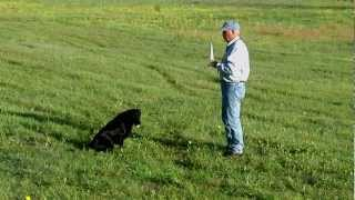 Can You Change Poor Line Manners in an Older Dog?