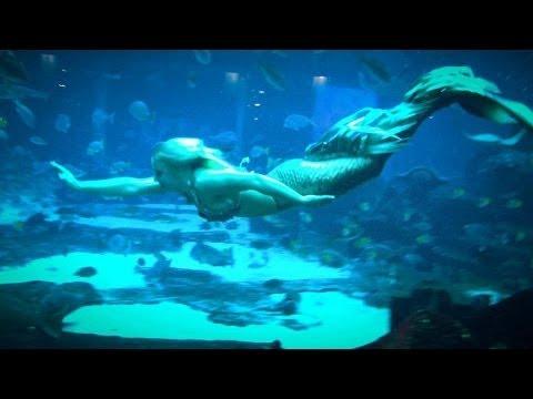 Real live Mermaid Melissa filming underwater at Atlantis ...