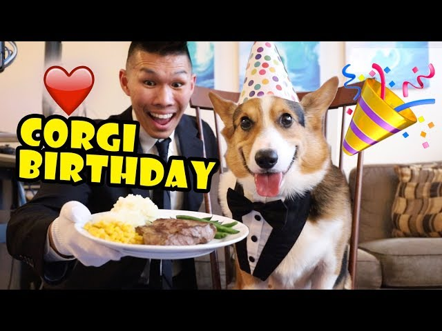 Corgi Dog Gets Butler for 5th Birthday || Life After College: Ep. 625