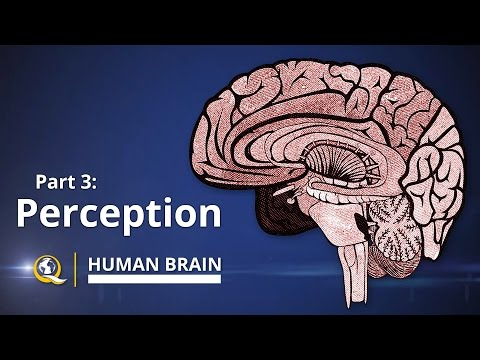 Perception - Human Brain Series - Part 3