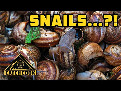 SNAILS?! You won't believe this delicious recipe - South African farmed snails