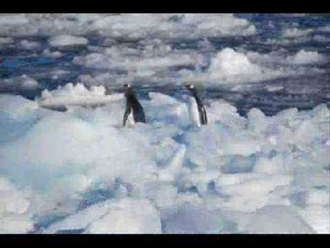IAE International Antarctic Expedition 2008